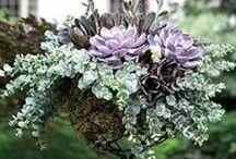 The Garden / by Kerri D.