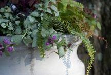 Container Garden Gallery / by terrain