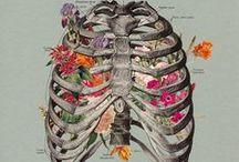 He(art) and bones / by Danai Cg