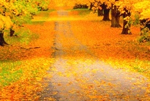Fall into Foliage / by Fodor's Travel