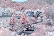 Japan / by Jennifer Lewis