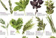 Herbs / by Meriel Henson