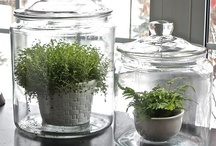 Plant pots, boxes, bottles, vases and others ..;) / In my house and in the garden I love using various things that can be plant or flower containers / by Lucyna A. Smykowska