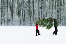 Christmas / Christmas holiday season, baking, trees, ornaments, family, snow, joy and cheer / by Beth Wood