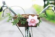 Bicycles / by Rachel Follett