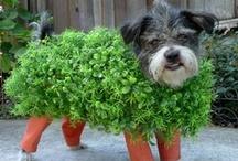 DIY Pets / by Quirky Alina