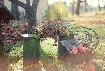 Gardenzity / by Katerina Baierova