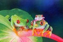 Frogs / by Debby Watkins