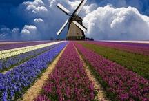 Hollands / by Lammie Kroezen