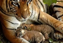 MOMMAS All! / Being maternal in the animal world.... / by DK Montague