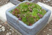 Hardy Succulents / Tough and reliable, these plants love a challenge - if you have a climate that is variable, dry soil and you don't want to (or can't) water a lot, these are the plants for a low maintenance yet beautiful garden... / by Drought Smart Plants