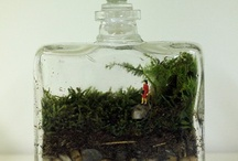 Tiny Gardens / by A Curious Work