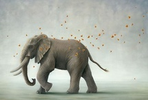 Elephants / by A Curious Work