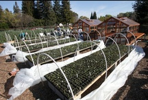 Our Garden / In 2009, the Contra Costa Master Gardeners teams with the Bay Area News Group to create a demonstration garden that also feeds the hungry. Watch us grow. / by Joan Morris