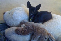 Favorite pet toys / Does your dog, cat, horse, bird, ferret or gold fish have a favorite toy? Snap a picture, send it to jmorris@bayareanewsgroup.com, then come back to see it posted here. / by Joan Morris