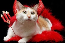 Pets in Costume / Who knows why we do it or why they tolerate, but thank goodness we both do. / by Joan Morris