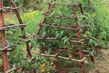 Homesteading, Gardening & Plants / by Tekerhani Nisori