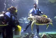 Behind-the-scenes / by Adventure Aquarium