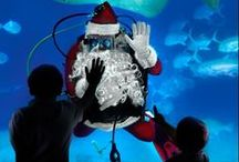 Christmas Celebration / Experience the magic of the holidays at the Philadelphia Region's most unique holiday celebration - Adventure Aquarium's annual Christmas Celebration, featuring the one and only SCUBA Santa! November 23, 2012 through January 1, 2013 Adventure Aquarium on the Camden, NJ Waterfront will be transformed into an underwater winter wonderland featuring larger-than-life decorations, twinkling lights, glowing trees, and gently falling snow. / by Adventure Aquarium