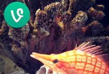 Adventure Aquarium Vines / Escape for 6 seconds for tiny glimpses inside the place where there are always more new things to see and do!  / by Adventure Aquarium