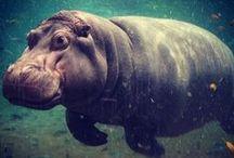 Adventure Aquarium Instagrams / Follow us on Instagram for behind-the-scenes pics, animal shots and more! http://www.instagram.com/adventureaquarium / by Adventure Aquarium