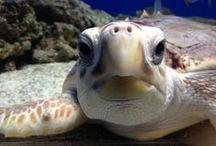 Turtles! / by Adventure Aquarium