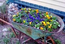 Flowerbeds and Gardening / by Lisa Sanders