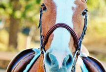 horse pics / horses horses horses!!!! / by Tawnya&Hannah Nations