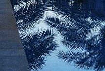 Palms / by Ian Robertson