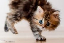 Furry friends / by Michelle Tews Hamby