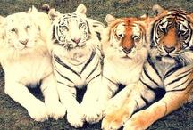 Animal Kingdom / by Rose Godinez