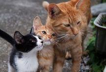 Cats / by Rose Godinez