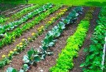 Farm & Garden / Flowers, plants, garden, farmers / by Retetetv.ro