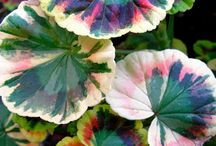 Flowers / by Diane Reheis
