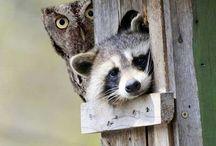 Animals / by Diane Reheis
