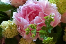 Flowers and arrangements / Roses, peonies, lilac...  / by sharon parfett