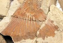 Fossils are FUN / It's no secret that we love fossils... / by Burke Museum of Natural History & Culture