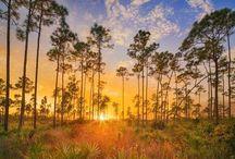 Florida! / by Diane Reheis