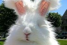 Farm - rabbits / rabbits / by Laura Fremont