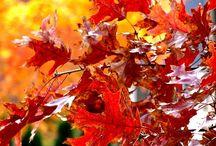 Season of Autumn / by Deeana Grasa