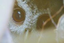 Owls / by Kristin Stieglitz