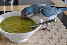 Amy's Food Fun --  Soups, Stews, Chowders & Chilies / You get the drift! Ha! / by Amy JayBee