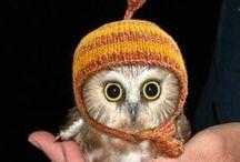 Just too cute! / by Sherri Wilson