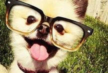 Pets in Specs / by Specs Nashville