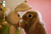 Hopping along / Easter / by Jennifer Ingold Seltzer