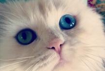 hello kitty / by Ciaran Blumenfeld