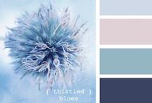 Colour Schemes / by Emily Olfert