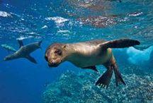 Galapagos.  / by Jill Plotke