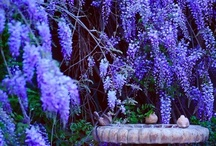 Jardin / by Ginny Gragg