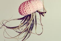 Nature inspired design / by Stacey Bramhall